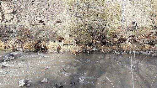 Sıcak Hava Hayvancılıkla Uğraşanlara Yaradı