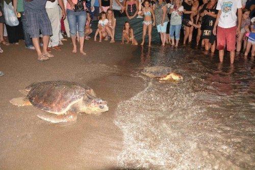 Tedavileri Tamamlanan Deniz Kaplumbağaları Denize Bırakıldı