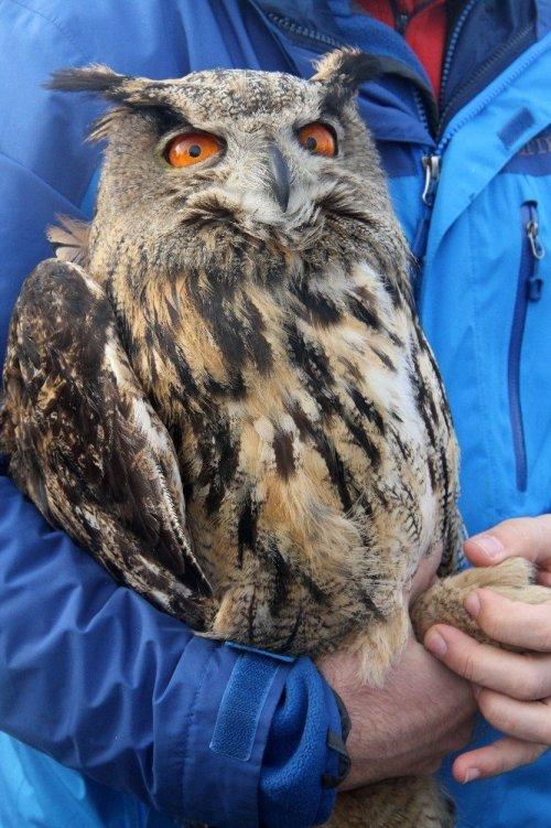 Tedavisi Tamamlanan Baykuş Doğaya Bırakıldı