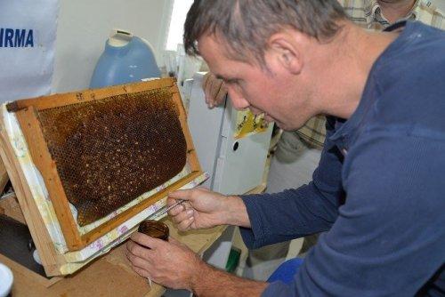 Üniversiteli Arıların Ürünleri Satışa Sunuldu