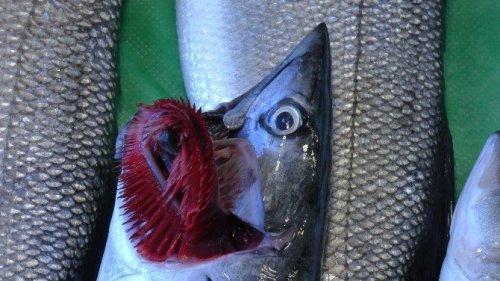 Uzmanlar Balık Tüketilmesini Öneriyor