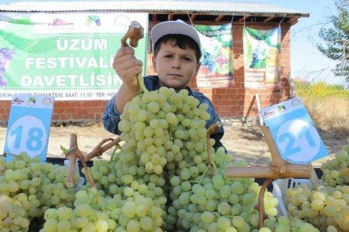 Üzümler Birinci Olmak İçin Yarıştı
