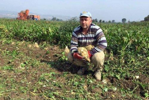 Yenişehir'de 50 Bin Ton Pancar Rekoltesi Bekleniyor